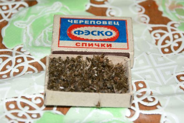 Сушеных комаров целый коробок
