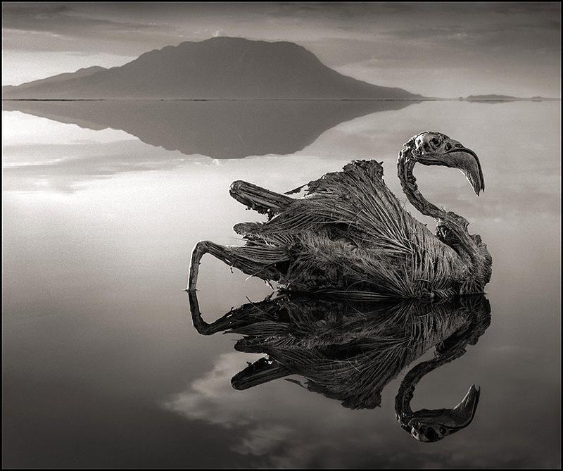 Озеро, превращающее плоть в камень