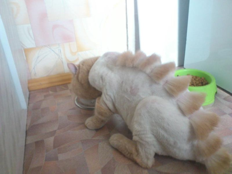 Парикмахер превратил кота в динозавра