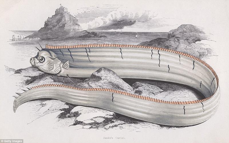 Морское чудовище длиной 5,5 метров на побережье Калифорнии