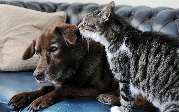 Кошка стала поводырем для слепого пса