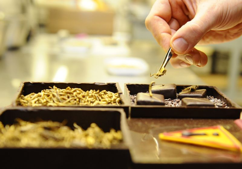 Для гурманов: французские конфеты с насекомыми