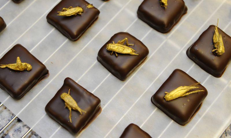 Для гурманов: французские конфеты с насекомымиinsects_sweets_01