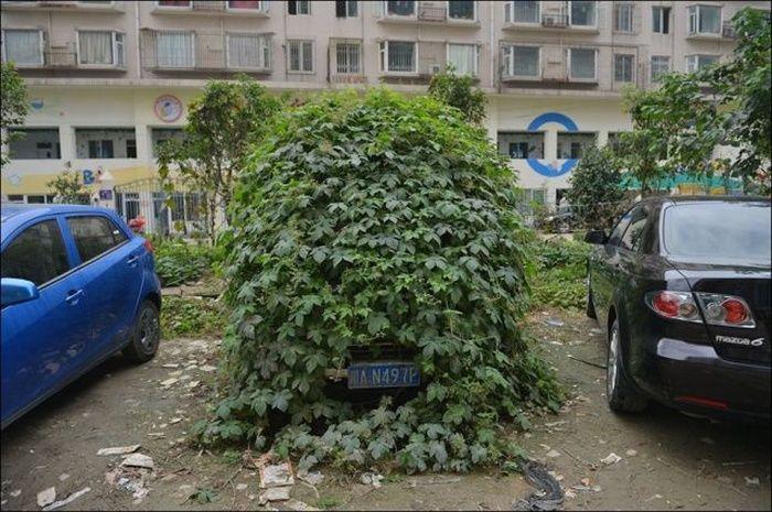 Китайские эвакуаторы дождались, пока автомобиль зарастет травой