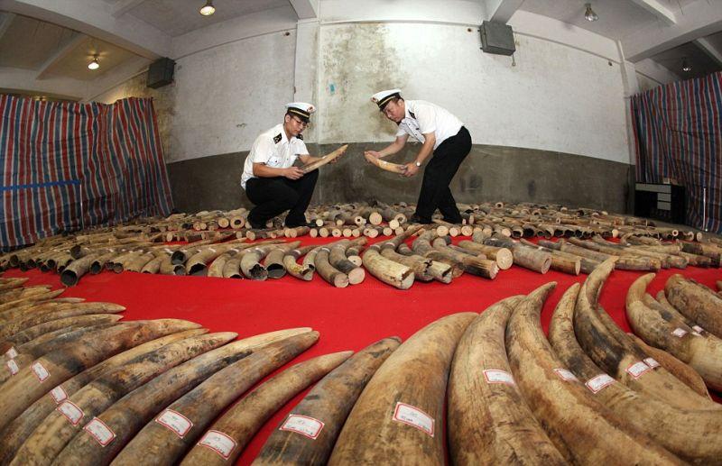 Сколько же здесь убитых слонов?