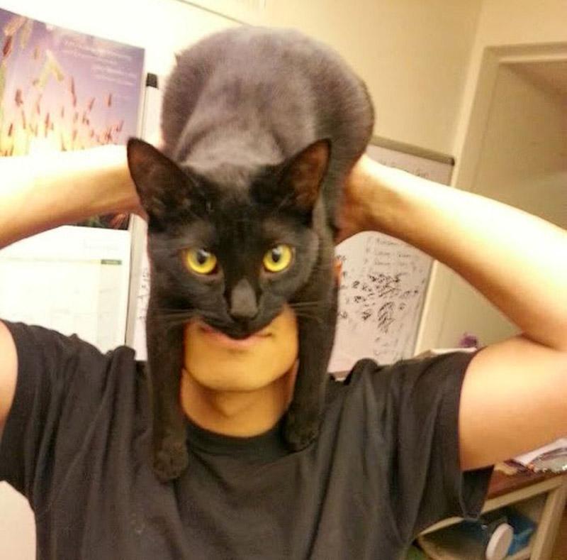 Кэтмен-мания