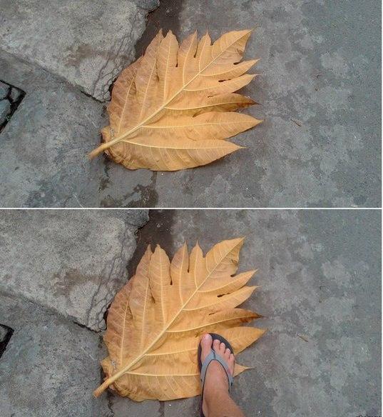 Осень на Фокусиме