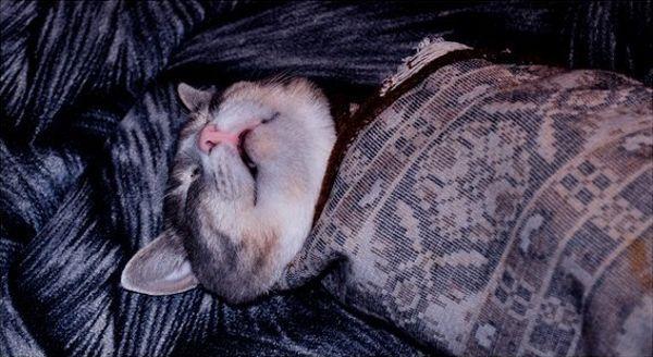 Безопасный и эффективный способ разбудить кота