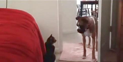 Cобака не пройдёт - кот не пропустит!