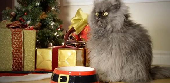 Коты-звезды Youtube поздравляют человечество с Рождеством и Новым годом