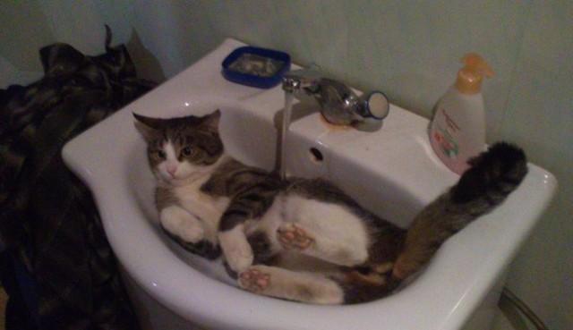 Почините мне кота!
