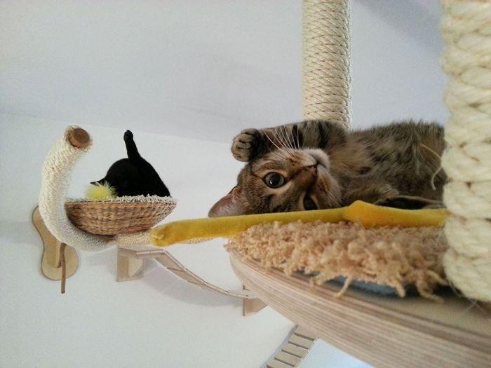 Любитель котиков построил для своих любимцев великолепную игровую площадку в комнате