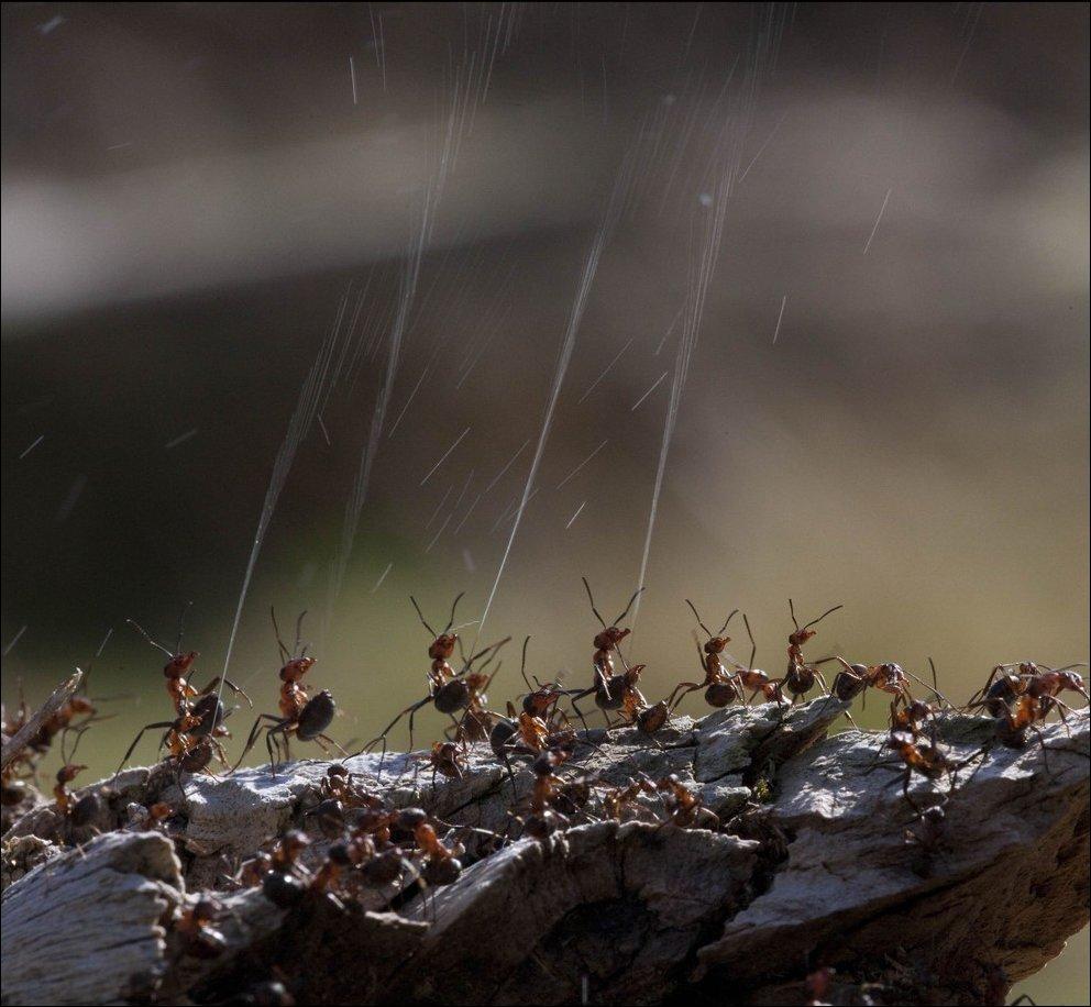 ПВО муравелов в действии