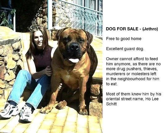 Продаётся собачка