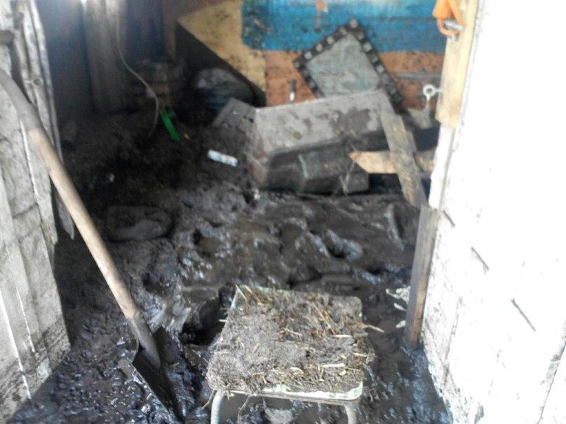 Экстренное сообщение из приюта по спасению лошадей Пегас в Днепропетровске