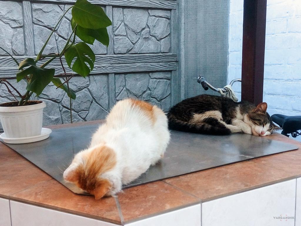 Коты Варганчика спят
