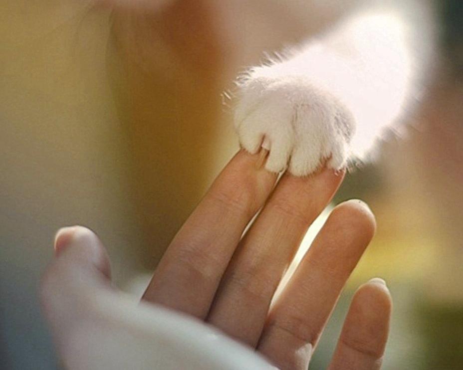Пермский сайт защиты животных
