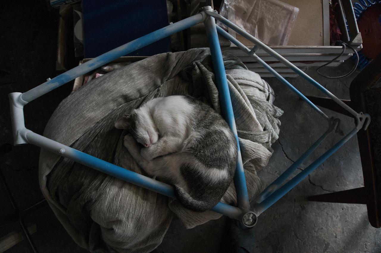 кот спит рама велосипед хвз