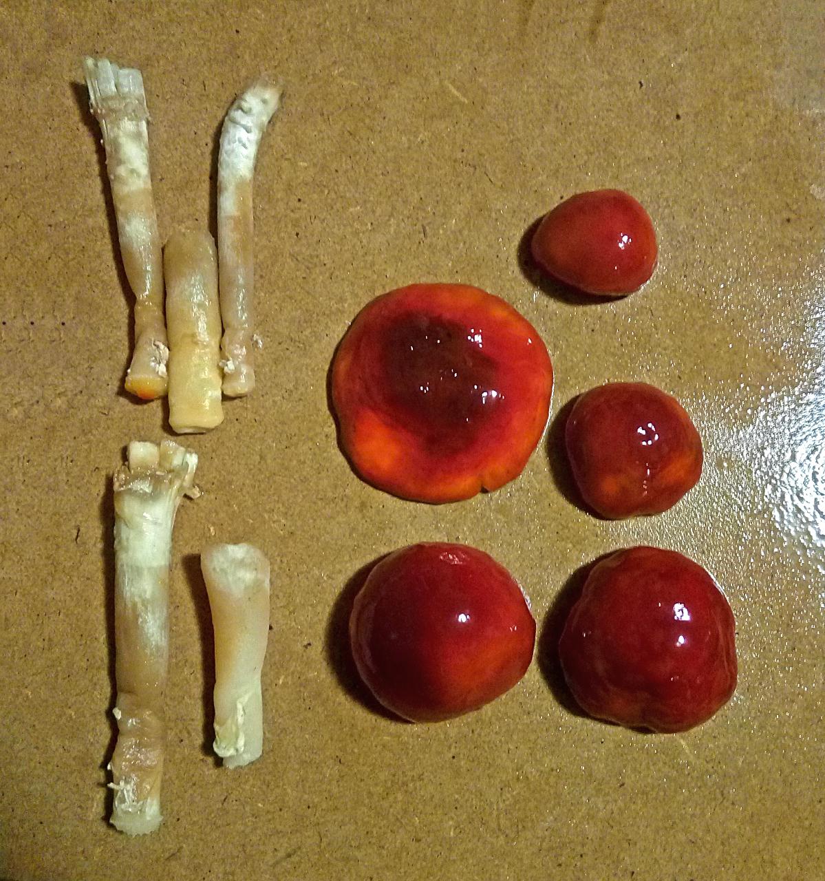 как называется гриб?