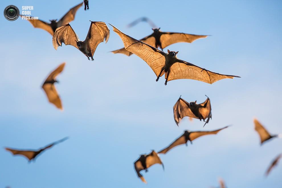 Миграция миллионов летучих мышей