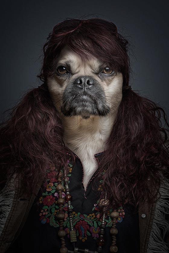 Как выглядят собаки, одетые как люди