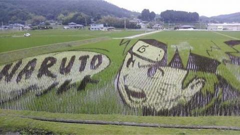 Аниме на рисовых полях Японии
