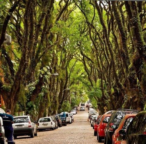 Самая зелёная улица в мире