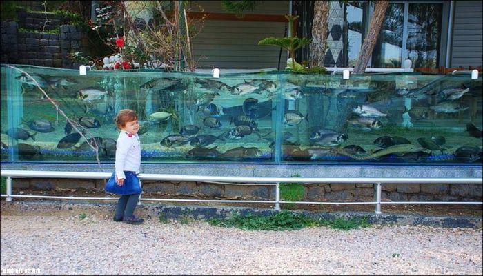 Забор в виде аквариума