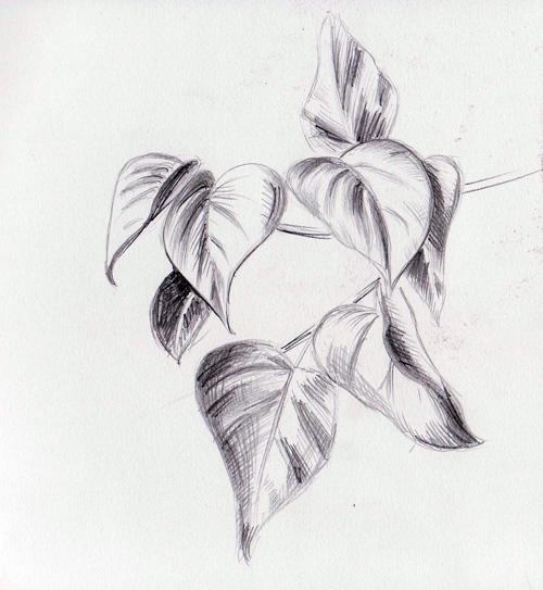 рисуем карандашом листья:
