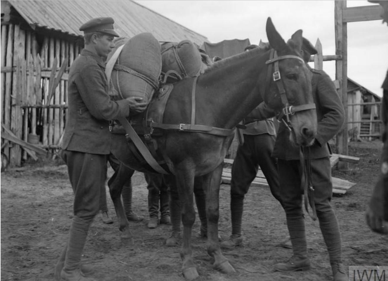 1919. Русские офицеры грузят вещи на лошадь, Мурманск