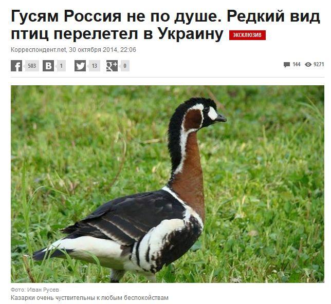 Птицы11