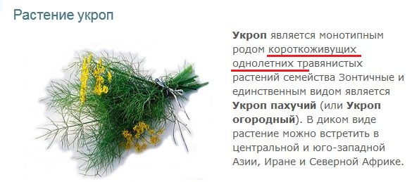 укроп1