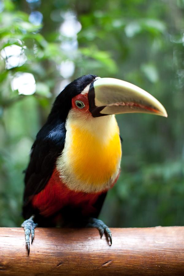 Парк птиц в Фоз-до-Игуасу.