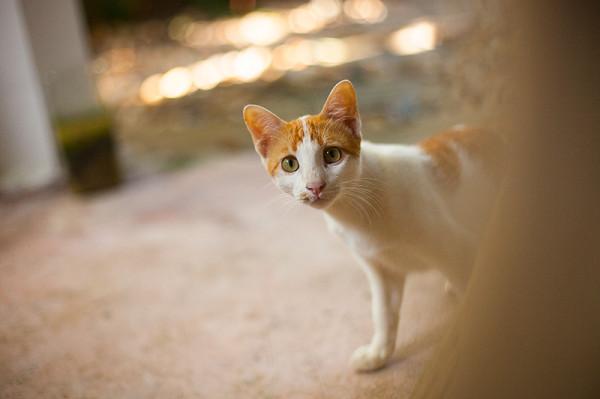 котишка