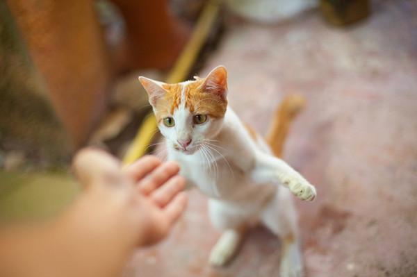 котишка2