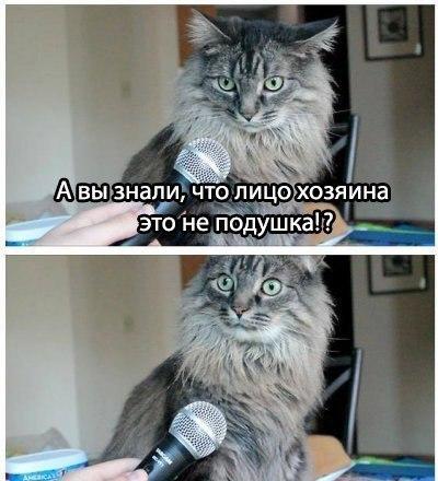 кот 5