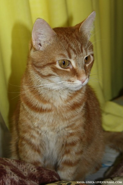 Рыжий кот.jpg