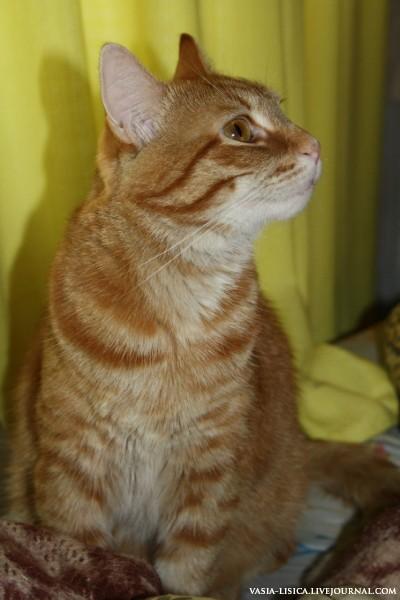 Рыжий кот (2).jpg