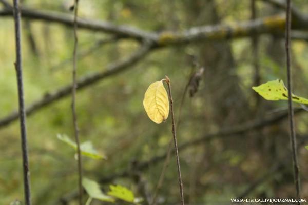 осень с лесу