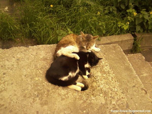 кошки на улицах Рыбинска