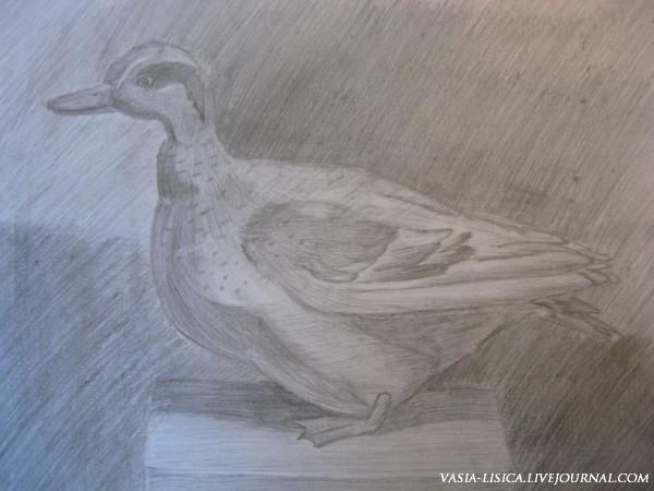 Рисунок утки карандашом
