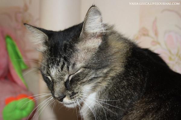 Боня кот