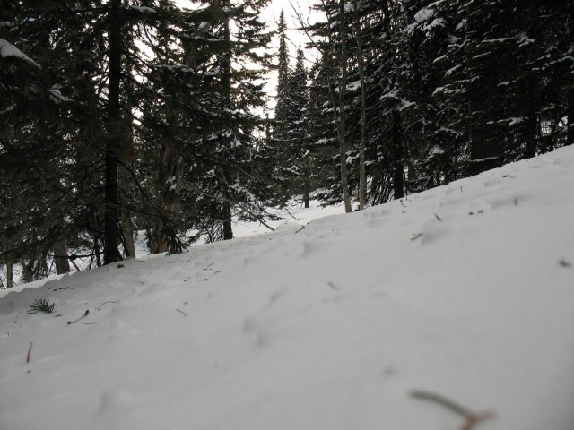 Спуск по целяку в лесу тоже не шутка. Отдыхаю по пояс в снегу.