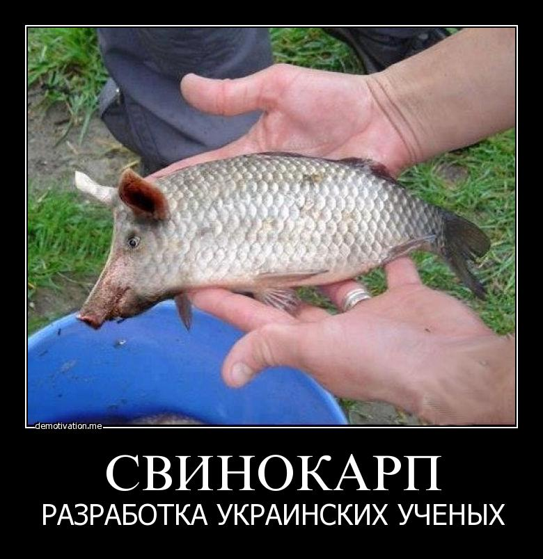 укрокарп
