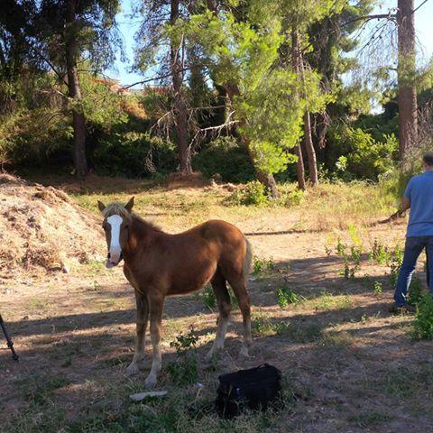 Pefkohori horse