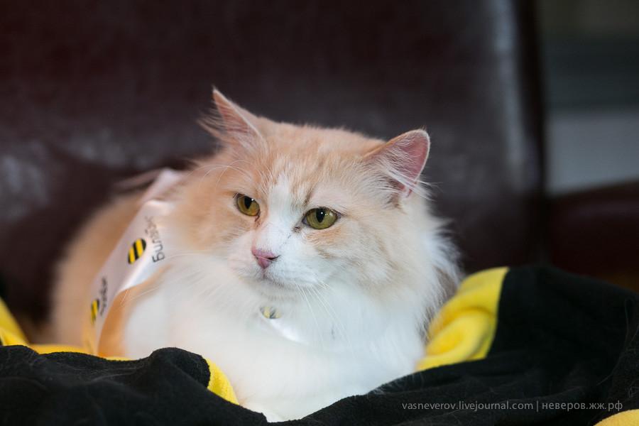 beeline_cat_19022014_0002