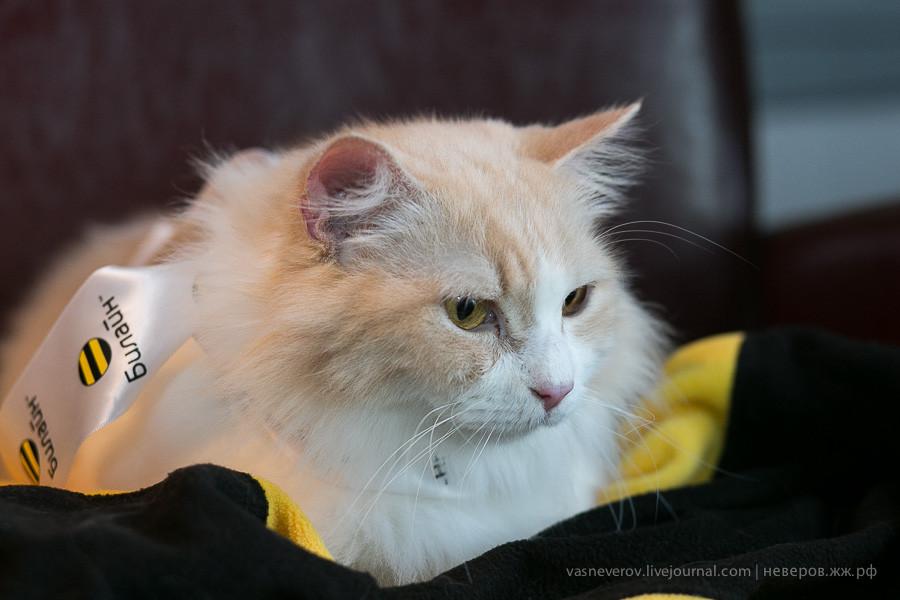 beeline_cat_19022014_0003