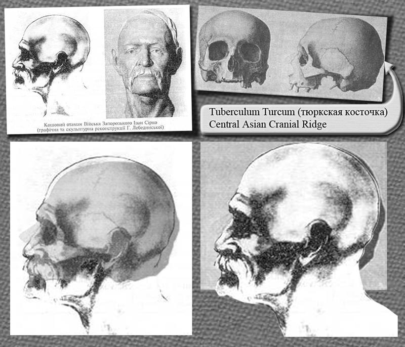 Central Asian Cranial Ridge Myideasbedroom Com