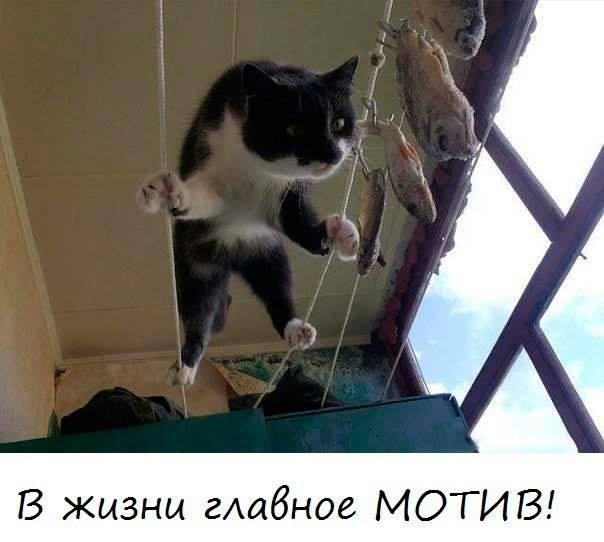 мотивированный кот