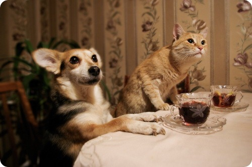 cat_and_dogs_18_01